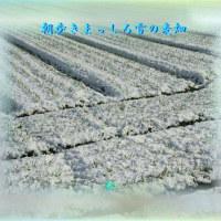 フォト575『 朝歩きまっしろ雪の麦畑 』qy1104