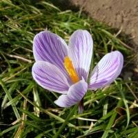 庭の花-2(2017年春)