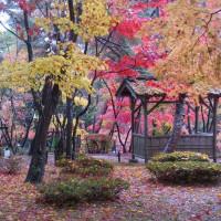 有名寺院の紅葉に匹敵する無名の日本庭園の紅葉