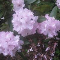 留守中に咲いた花たち