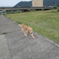 土曜日の夕方のお散歩