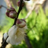 謎解き詠花鳥和歌 残菊と白鳥 25 悪態(悪口)祭り