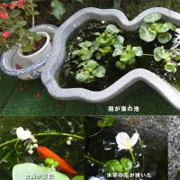 水草の可憐な花に癒される