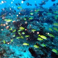 今日はしけたー! 沖縄ダイビング 那覇シーマリン