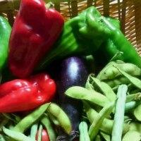 冷蔵庫のない生活野菜保存その他