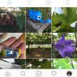 Instagramも更新してます。