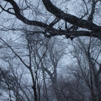 舞い降りるこな雪にけむりる里山を歩いて
