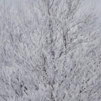 樹も凍る!