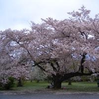 小石川植物園に行ってみました