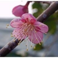 春の兆しが見え始めてます。