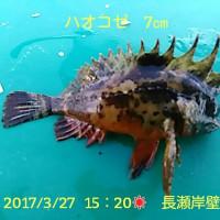 笑転爺の釣行記 3月27日☂☀ 長瀬岸壁