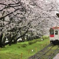 桜の駅3・・・【いな】