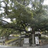 娘希望の粟田神社