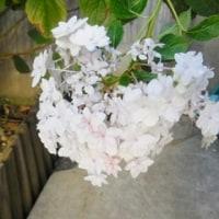 わが家の お花様達  626