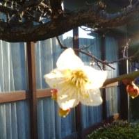 1月14日の花