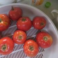 猛暑下の野菜たち