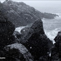 ★種差海岸~小雪舞う中を~
