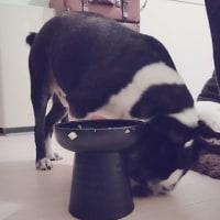 ザ・犬食い