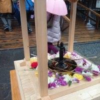 雨の中のお花見とシルクフラワー