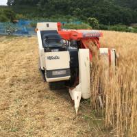 小麦の刈取り