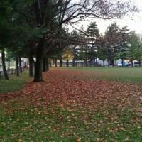 近所の公園🍂