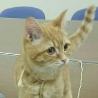 「かわいい猫」