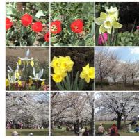 2002-03-24青葉の森。花見は国際交流の形でも行われています。