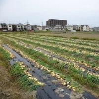 旬の野菜を給食に! ~学校栄養士の農家訪問 石丸の巻~