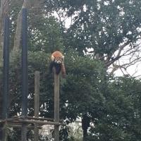 二週続けて千葉市動物公園
