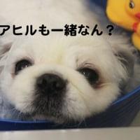 炭酸浴(ビッキー編)