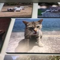 『 にゃんぽとれ ~猫たちのポートレート~ 』