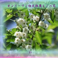 フォト575qt1407『 オンリーワン相互独尊えごの花 』