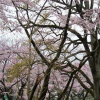 2017/4/8 マーケット会場風景