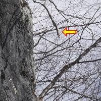 木の上から枝も落ちてくる
