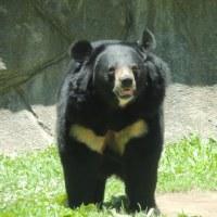 クマのメディスン