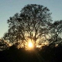 木の間からの夕日
