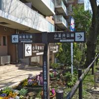 3月22日(水)日野市WG-5月下見・萩山~小金井公園B