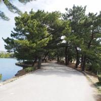 水と緑のオアシス 大濠公園(中之島) 3
