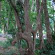 日野駅から日野煉瓦・連理木などを散策~(続)