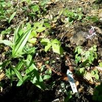 「俣野別邸庭園」で花を楽しむ