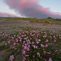 ピンクの空とピンクの花
