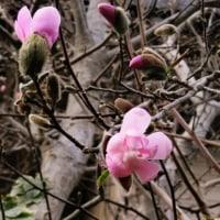 十六本堰の水門が開いた日は、執務室の片づけをして、春日神社へお参りしました