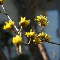 早春の庭の花