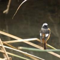遊歩道の鳥たち