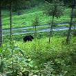 vol.329     クマ保護から管理へ