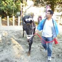 住吉神社の馬駆け