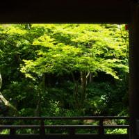 鎌倉妙法寺散策