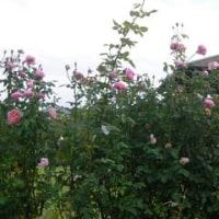 泉南農業公園「花咲きファーム」にて・・