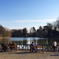 善福寺公園の冬