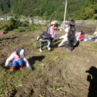 しょうぶ畑の草引き